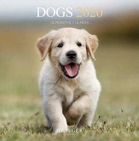 ドレジャー【ラージカレンダー】DOGS(79007927)2020年カレンダー(壁掛けタイプ)犬/動物/かわいい/イラスト/写真/フォト/スケジュール/月曜始まり/日本語/英語/スペイン語/フランス製/中国印刷/輸入雑貨/日用品)[FSC認証]