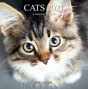 ドレジャー 2021年【ラージカレンダー】CATS(壁掛けタイプ)猫/動物/かわいい/イラスト/写真/スケジュール/月曜始まり/日本語/英語/フランス製/中国印刷/輸入雑貨(21LC-001)[FSC認証]