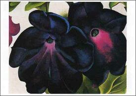ポストカード 【アート】 オキーフ「黒と紫のペチュニア」【148×105mm】(VD5729)