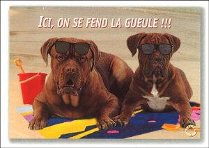 ポストカード 【サマー/カラ?写真】「2匹のサングラスの犬」海 ビーチ メッセージカード 夏物 暑中見舞い(FLG-094)