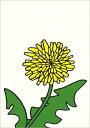 ポストカード 【イラスト】絵本/ミッフィーシリーズ/ディック・ブルーナ「たんぽぽ」【150×105mm】(DB265)(植物/花/…