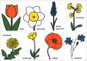 ポストカード 【イラスト】絵本/ミッフィーシリーズ/ディック・ブルーナ「花の図鑑」【150×105mm】(DB510)(植物/フラ…