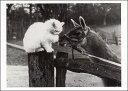 ポストカード 【モノクロ写真】「猫とラマ」(HZN6562)