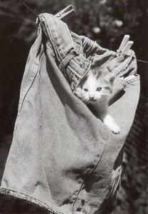 ポストカード 【モノクロ写真】「洗濯物に隠れる子猫」(HZN6771)