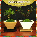 小品盆栽:福寿の盆栽セット(黒松&長寿梅)*【受け皿付き】【送料無料】