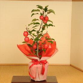 【敬老の日 プレゼント】盆栽:長寿りんご*(ラッピング付)【送料無料】長寿紅(姫リンゴ)りんごの木