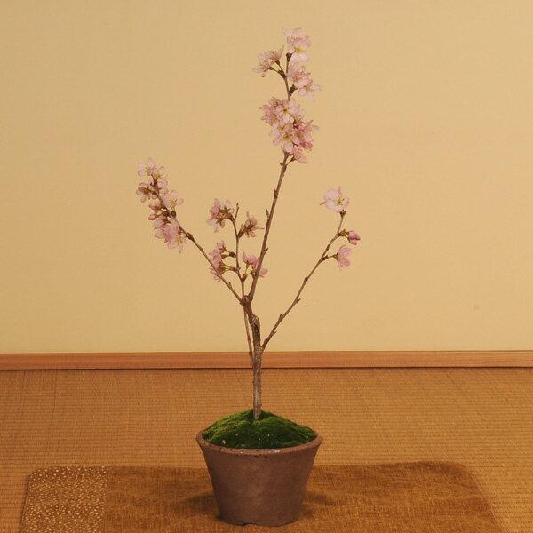 ミニ盆栽:啓翁桜(けいおうさくら・瀬戸焼小鉢)*【送料無料】