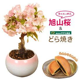 【母の日 プレゼント】母の日ギフトにおすすめ:母の日開花桜&どら焼きセット*【送料無料】