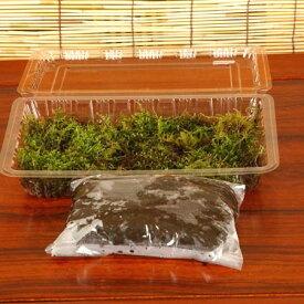 天然苔玉キット