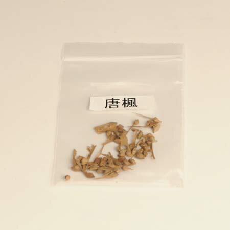 盆栽種子:唐楓