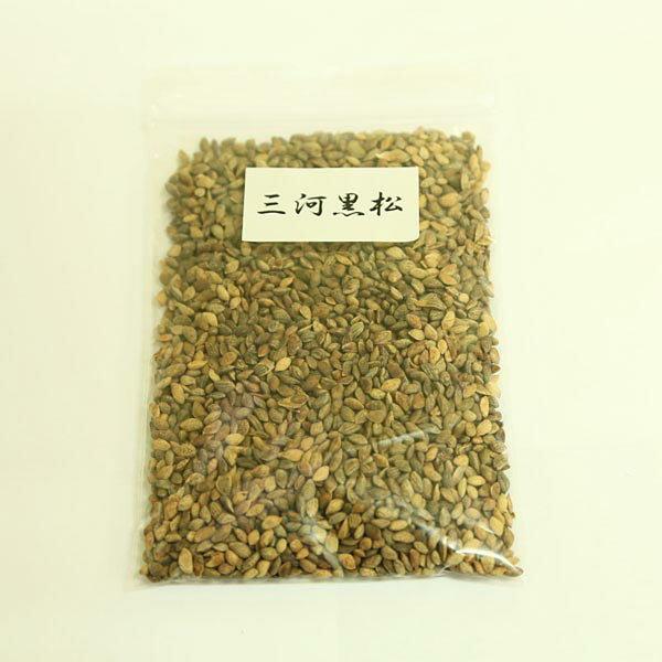 盆栽種子:大容量種子(三河黒松 / 黒松 / 山もみじ/野村もみじ/五葉松)【お得】【大袋】