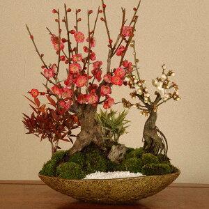 盆栽:大紅梅白梅寄せ*(紅白)(信楽焼鉢)【送料無料】【2021年開花終了】