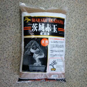 用土:硬質赤玉土 中粒 約14L*