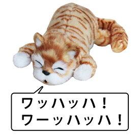 音に反応して笑う猫 猫山さん 薄茶