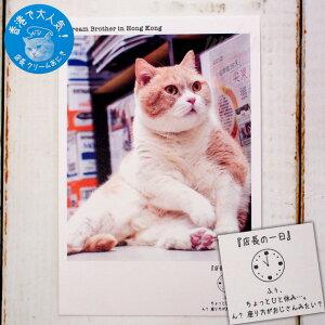 【猫のポストカード】クリームあにき/AM11:00(学研ステイフル)(絵葉書 絵はがき 猫雑貨 ネコグッズ ねこ キャット)EC