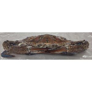 冷凍 渡り蟹(丸)10kg(匹100-150g、150-200g、200-300g各サイズあり)kg1080円(税別)業務用 ヤヨイ