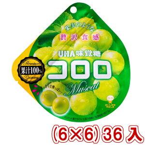 (本州一部送料無料) 味覚糖 コロロ マスカット (6×6)36入 (Y10)