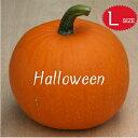 【ハロウィン】生かぼちゃ Lサイズ カボチャ 本物 自農場産 ハロウィーン種 ハロウィンかぼちゃ ハロウィンカボチャ …