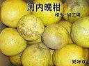 【sale】【送料無料】訳あり/ジュース用河内晩柑(格外・加工用)約4kg【smtb-kd】