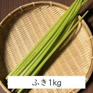 【 季節限定 山菜 産地直送 】天然 山菜 フキ (1kg)|高知県土佐山産|ふき 葺 水ふき