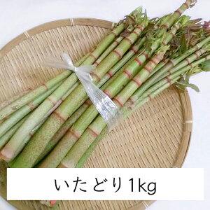 【 季節限定 山菜 産地直送 】天然 山菜 イタドリ (1kg)|高知県土佐山産