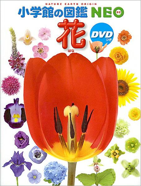【高ポイント還元】小学館の図鑑NEO 花(DVD付き) 【宅配便(追跡あり)送料無料】