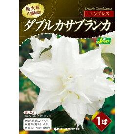 ゆり 球根 ダブルカサブランカ エンプレス 花色:白色 1球入 カネコ種苗