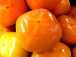 柿 無農薬・和歌山の松本さんの柿5kg(約20〜25個)★9月下旬発送予定★有機JAS(無農薬・無添加)★オーガニック