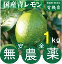 国産無農薬青レモン1kg★有機JAS規定を守って栽培★小笠原島産★1kgは約6個〜7個です。