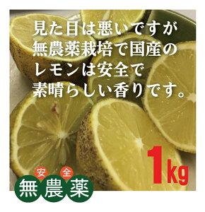 無農薬国産レモン1kg(約5〜8個)★ノーワックス★防カビ剤不使用★広島県★万一カビてお届けした場合はお取替えいたします。