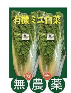 有機ミニ白菜(約300g)×2玉 有機JASミニ白菜★長野産
