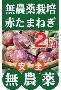 無農薬たまねぎ 赤玉ねぎ2kg★無農薬・無添加★和歌山県産