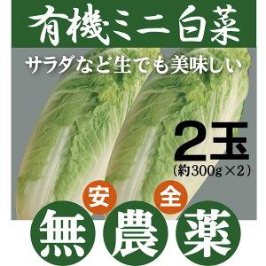 有機白菜(はくさい) ミニ白菜(約300g)×2玉 有機JASミニ白菜★長野産
