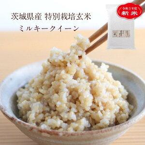 【新米】令和3年度産 茨城県産 特別栽培玄米「しらさぎミルキークイーン」(5kg)|寝かせ玄米 玄米 寝かせ ごはん 美味しい 寝かせ玄米ごはん ミルキークイーン ご飯 米 こめ お米 5キロ ス