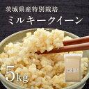 【あす楽】【28年産】茨城県産 特別栽培玄米「しらさぎミルキークイーン」(5kg)