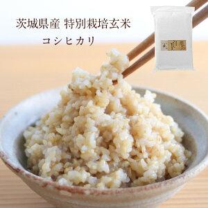 茨城県産 特別栽培玄米「コシヒカリ」(5kg)| 寝かせ 玄米 寝かせ玄米 寝かせ玄米ごはん ご飯 お米 米 コシヒカリ こしひかり ビタミン ミネラル 食物繊維 健康 栄養 美容 ブランド米 こめ