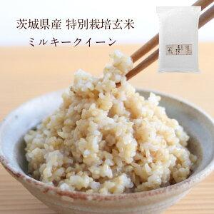 茨城県産 特別栽培玄米「しらさぎミルキークイーン」(5kg)|寝かせ玄米 玄米 寝かせ ごはん 美味しい 寝かせ玄米ごはん ミルキークイーン ご飯 米 こめ お米 5キロ スーパーフード コメ お