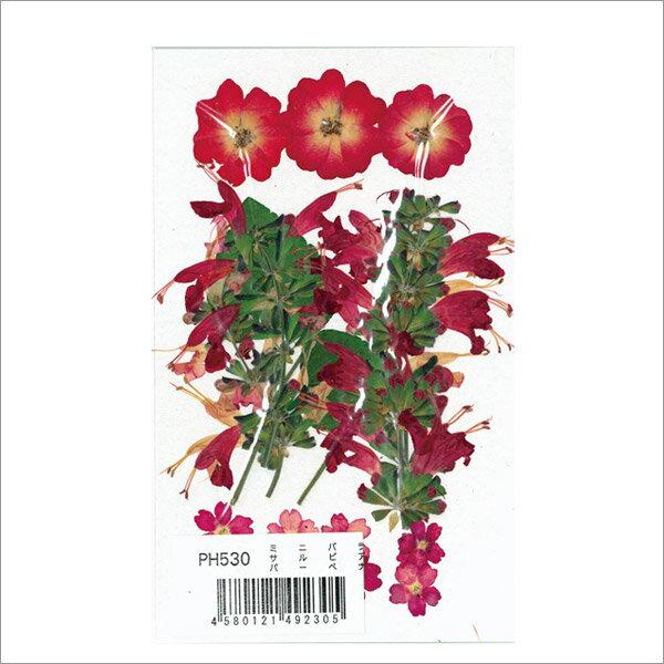 つみたて花パック ミニバラ・サルビア・バーベナ /PH530 10個セット 【まとめ買い・大口】