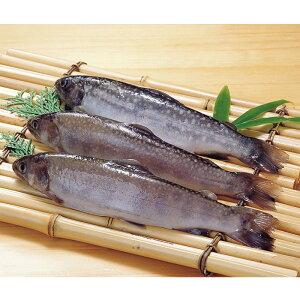 冷凍岩魚 1kg 岐阜県産大容量 まとめ買い 魚介類 海鮮 調理具材 料理材料 家庭用 業務用 [店舗にもお勧め] [食卓にもお勧め] [冷凍食品]