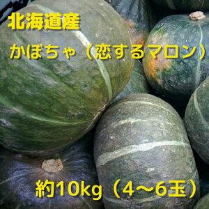 北海道産 かぼちゃ(恋するマロン)10kg 贈り物 ギフト 北海道 北海道野菜 カボチャ 南瓜 天ぷら 煮物 BBQ パンプキン ハロウィン ハロウィーン