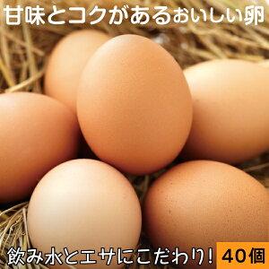 財寶温泉 生 卵 40個 (10個×4パック) 送料無料 [濃厚 卵黄 鹿児島県産 たまご 玉子 鶏卵]