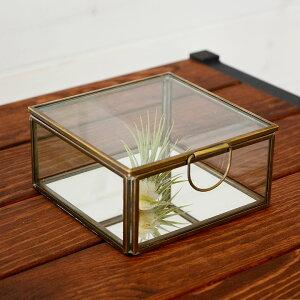 ガラスと真鍮でできた鏡付き収納ケース(S)(63120) 小物入れ ガラスケース ふた付き ガラスボックス おしゃれ ジュエリーボックス アクセサリケース テラリウム 四角 小物収納 かわいい 塩系
