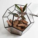 ガラスと真鍮でできた多面体テラリウム [大](63140) ガラスボックス ガラスケース テラリウム 容器 四角 ディスプレイケース 小物入れ 小物収納 塩系 ...