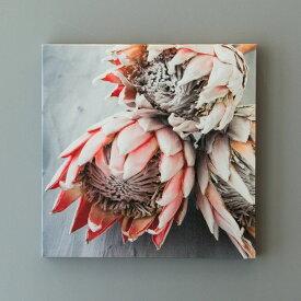 アートパネル プロテアフラワーA ネイティブフラワー 花 フラワー 植物 写真 アートフレーム 約30cm×30cm [66941]【 アートポスター キャンバスアート 壁飾り 壁掛け おしゃれ リゾート モダン 西海岸風 カリフォルニア かっこいい クール 】