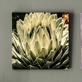 アートパネル アガベ 花 フラワー 植物 写真 アートフレーム 約30cm×30cm [66942]【 アートポスター キャンバスアート 壁飾り 壁掛け おしゃれ リゾート モダン 西海岸風 カリフォルニア かっこいい クール 】