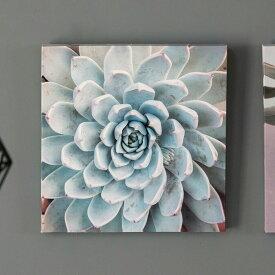 アートパネル エケベリア 多肉 植物 写真 アートフレーム 約30cm×30cm [66943]【 アートポスター キャンバスアート 壁飾り 壁掛け おしゃれ リゾート モダン 西海岸風 カリフォルニア かっこいい クール 】
