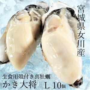 【春に美味しい♪生食用】宮城県女川産 かき大将(大)Lサイズ10個 生牡蠣 殻付き 生食3年もの 口からあふれるサイズ!安心の各検査機関許可済 産地直送 殻付き牡蠣 バーベキュー 海鮮 BBQ カキ
