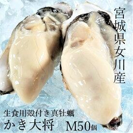 【春に美味しい♪生食用】かき大将Mサイズ50個 真牡蠣宮城県ブランド 殻付き牡蠣 2年もの 口いっぱいに広がるサイズ!安心の各検査機関許可済 産地直送 生牡蠣 バーベキュー 海鮮 BBQ カキフライ ギフト 贈り物