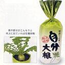 野菜を育てる栽培セット!大根栽培セット 自分大根【RCP】