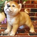 犬の置物 柴犬 秋田犬 お散歩中! 日本犬 ワンちゃん いぬ オブジェ リアル ドッグ モチーフ 毛並み こだわり オーナ…